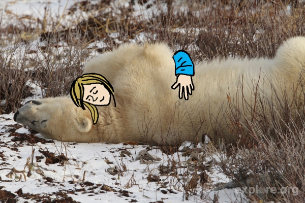 polarcuddle